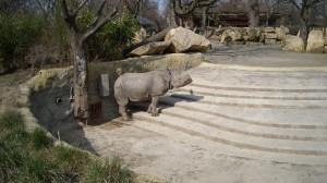 Rhinooooooooooo