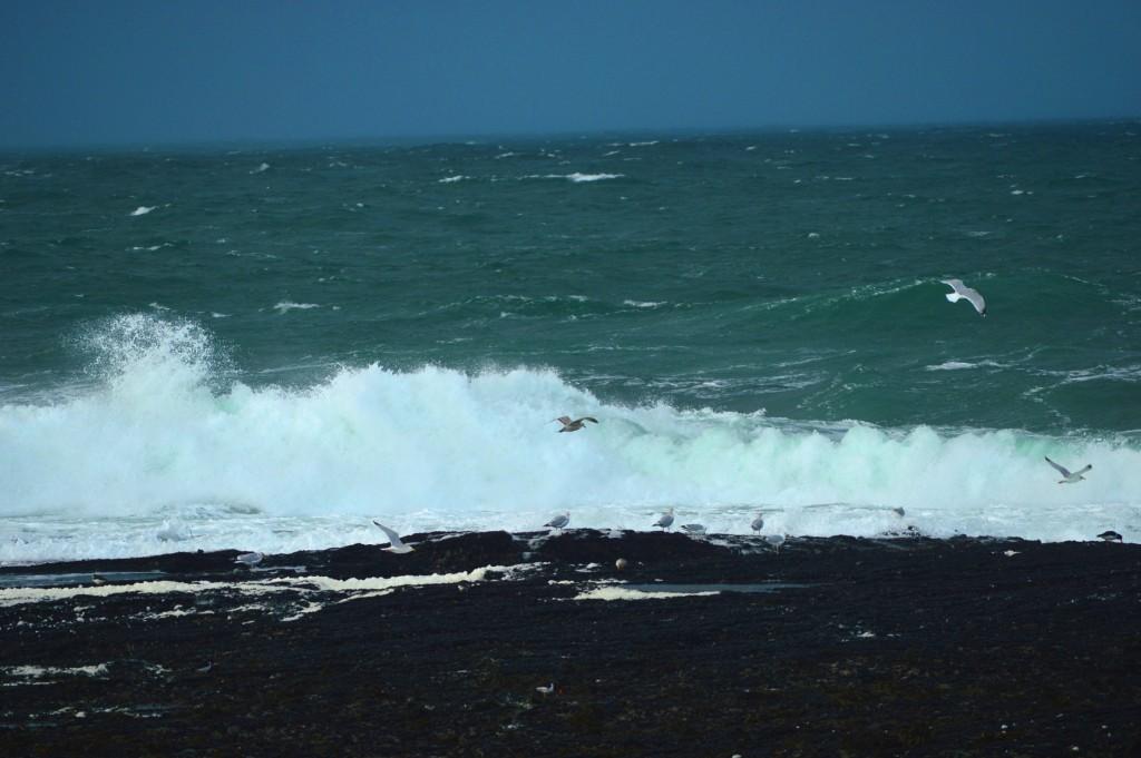 Pescăruși neimpresionați de oceanul care vine peste ei :)