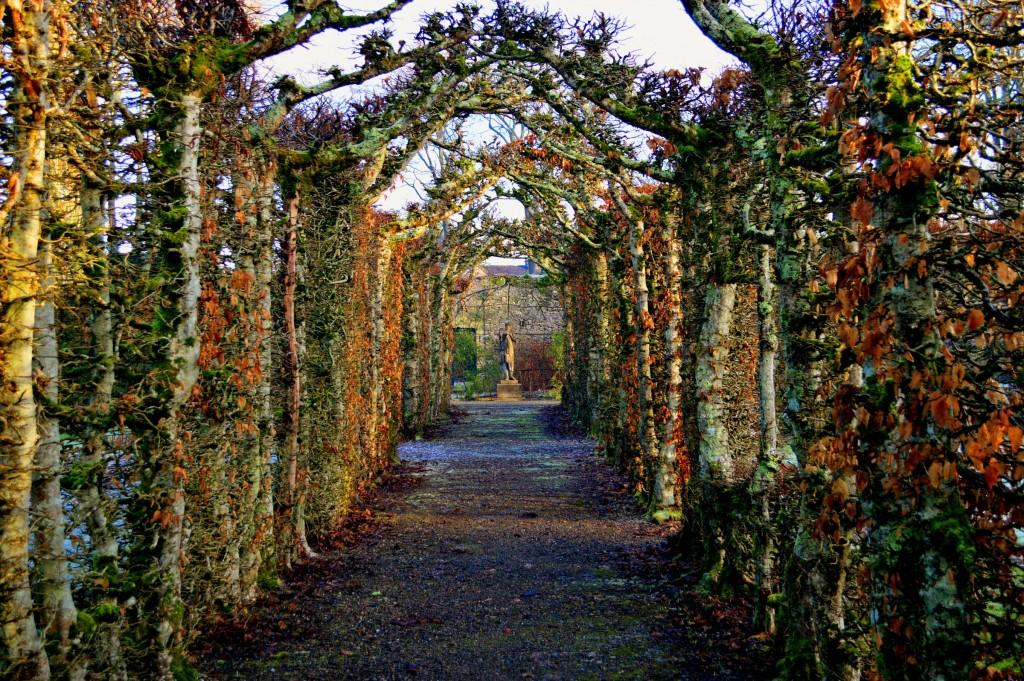 Un fel de Rivendale după ce-au plecat elfii spre Valinor. Sau grădinile din Birr pe iarnă ...