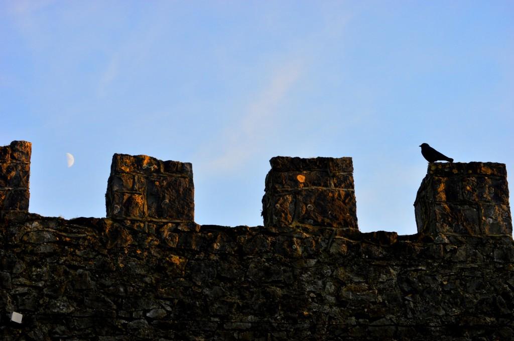 Corbul, Luna și zidul din jurul domeniului - o combinație potrivită pentru locul ăsta :)